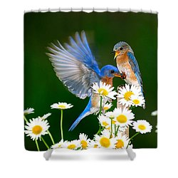 Bluebirds And Daisies Shower Curtain