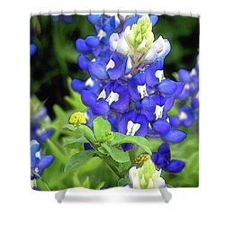 Bluebonnets Blooming Shower Curtain by Stephen Anderson