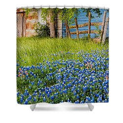 Bluebonnets Swaying Gently In The Wind - Brenham Texas Shower Curtain