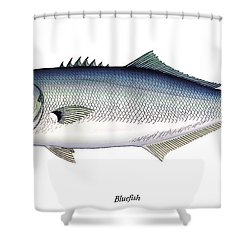 Bluefish Shower Curtain by Charles Harden