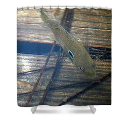 Bluegill On The Hunt Shower Curtain