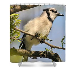 Bluejay 310 Shower Curtain