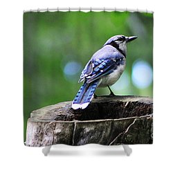 Shower Curtain featuring the photograph Bluejay by Alyce Taylor