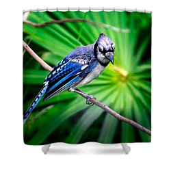 Thoughtful Bluejay Shower Curtain