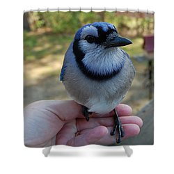 Shower Curtain featuring the photograph Bluejay by Mim White
