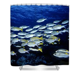 Bluelined Snappers And Yellowspot Emperors Shower Curtain
