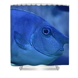 Bluespine Unicorn Fish Shower Curtain by Karon Melillo DeVega
