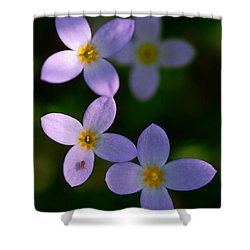 Shower Curtain featuring the photograph Bluets With Aphid by Marty Saccone