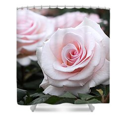 Blush Pink Roses Shower Curtain by Rona Black