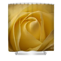 Blushing Cream Rose  Shower Curtain