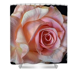 Shower Curtain featuring the photograph Blushing Pink Rose by Jeannie Rhode