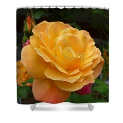 Shower Curtain featuring the photograph Blushing Rosalina by Lingfai Leung