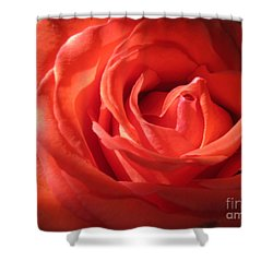 Blushing Orange Rose 1 Shower Curtain