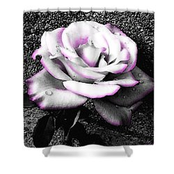 Shower Curtain featuring the photograph Blushing White Rose by Shawna Rowe