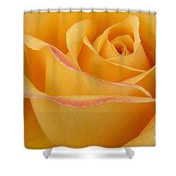 Blushing Yellow Rose Shower Curtain