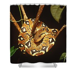 Boa Constrictor Shower Curtain by Art Wolfe