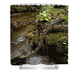 Boa Constrictor Crossing Stream Shower Curtain by Pete Oxford