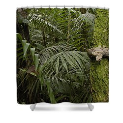 Boa Constrictor In The Rainforest Shower Curtain by Pete Oxford