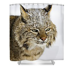 Bob Shower Curtain by Jack Milchanowski