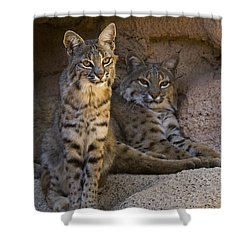 Shower Curtain featuring the photograph Bobcat 8 by Arterra Picture Library