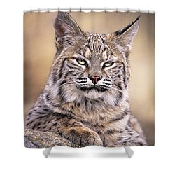 Bobcat Cub Portrait Montana Wildlife Shower Curtain by Dave Welling