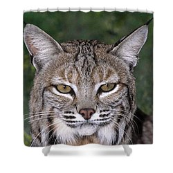 Bobcat Portrait Wildlife Rescue Shower Curtain by Dave Welling