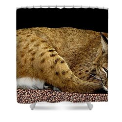 Bobcat Shower Curtain by Rose Santuci-Sofranko