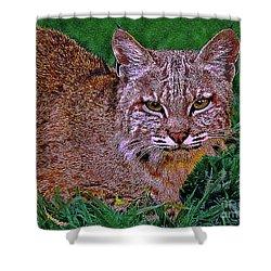 Bobcat Sedona Wilderness Shower Curtain by Bob and Nadine Johnston