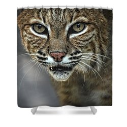Bobcat Stare Shower Curtain