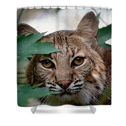 Bobcat With Maple Leaves Shower Curtain