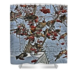 Bohemian Waxwing Feast Shower Curtain