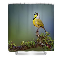 Bokmakierie Bird - Telophorus Zeylonus Shower Curtain by Johan Swanepoel