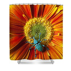 Boll Weevil On Mum Shower Curtain by Garry Gay