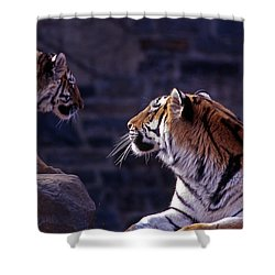 Bonding Shower Curtain by Skip Willits
