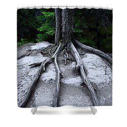 Shower Curtain featuring the photograph Bones by David Andersen