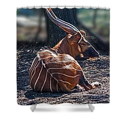 Bongo Shower Curtain