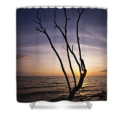Shower Curtain featuring the photograph Bonita Beach Tree by Bradley R Youngberg