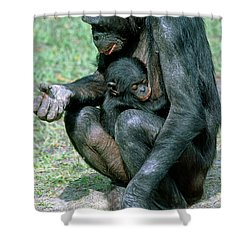 Bonobo Pan Paniscus Nursing Shower Curtain by Millard H. Sharp