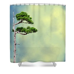 Bonsai Glow Shower Curtain by John Haldane