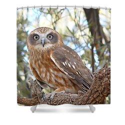 Boobook Owl Shower Curtain
