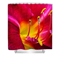 Boothbay Burgundy Shower Curtain