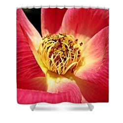 Borrowed Rose Shower Curtain by Chris Berry