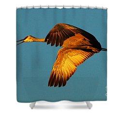 Bosque Del Apache Sandhill Crane Golden Light Shower Curtain by Bob Christopher