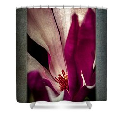 Boston Magnolia Shower Curtain by Eduard Moldoveanu