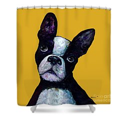 Boston Terrier On Yellow Shower Curtain