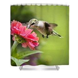 Botanical Hummingbird Shower Curtain by Christina Rollo