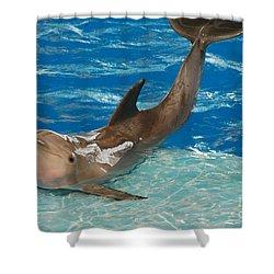 Bottlenose Dolphin Shower Curtain by DejaVu Designs