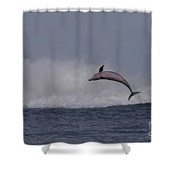 Bottlenose Dolphin Photo Shower Curtain