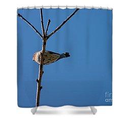 Shower Curtain featuring the photograph Bottoms Up by Meghan at FireBonnet Art
