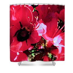 Shower Curtain featuring the photograph Bottoms Up by Robyn King